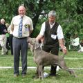 World_Weimaraner_Championship_Show-08_-_Best_Dog.JPG