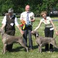 World_Weimaraner_Championship_Show_2008-_best_dog___best_bitch.JPG